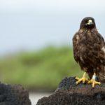 Fotoexpedice Galapágy