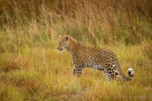 Foto safari Botswana 2017