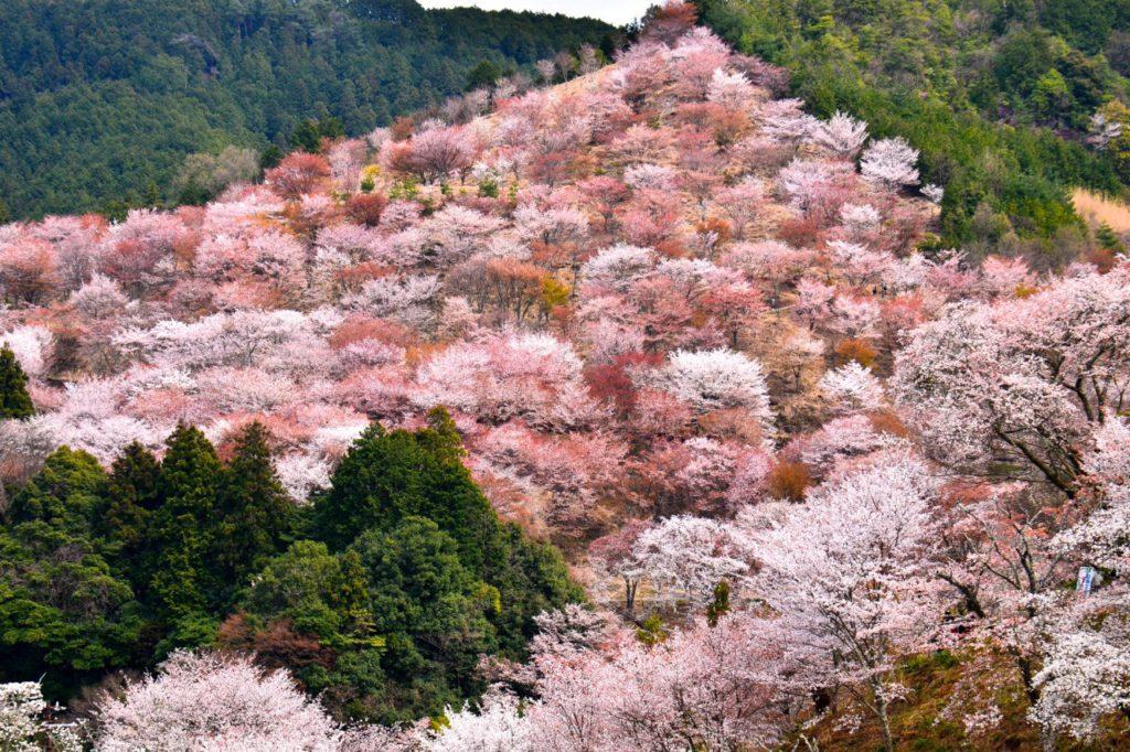 Fotoexpedice Japonsko 2019